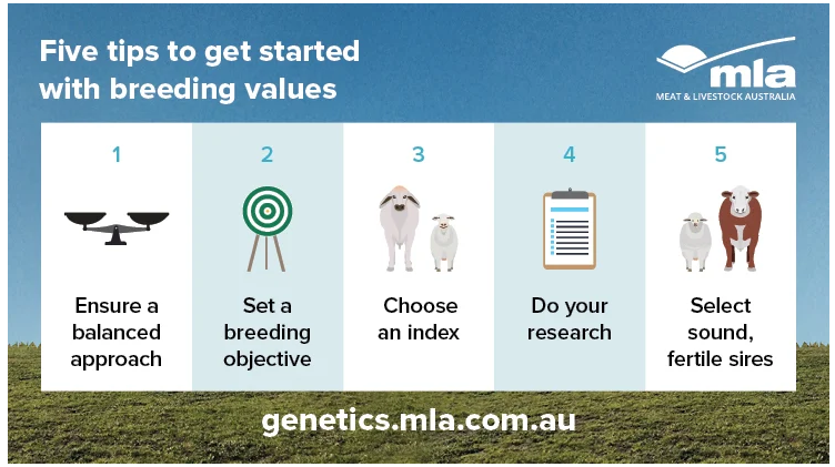 Five tips to get started with breeding values