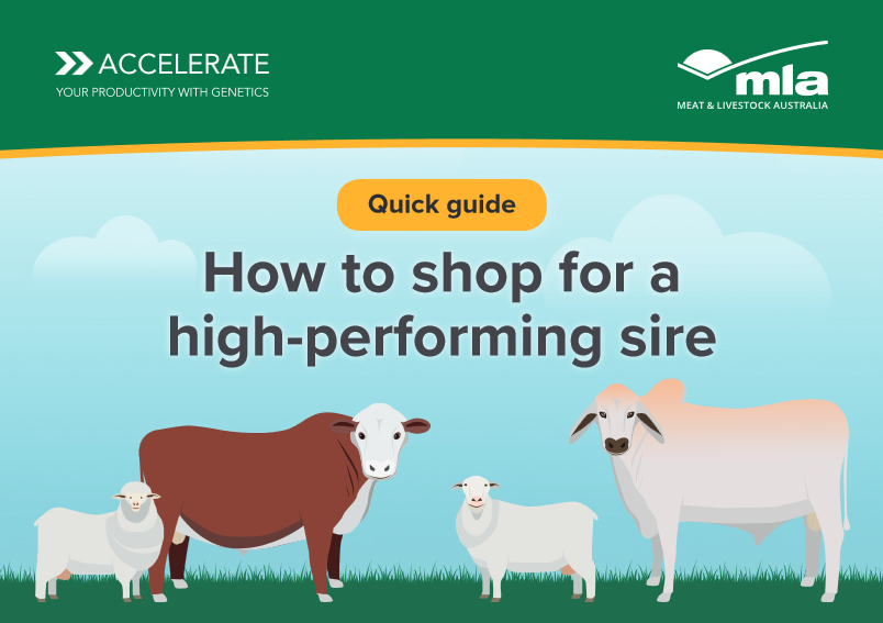 How to shop for a high performing sire